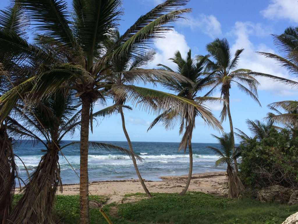barbados gluten free blog and website